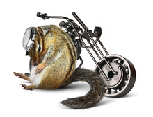 Wall Mural - Funny chipmunk biker with motorcycle